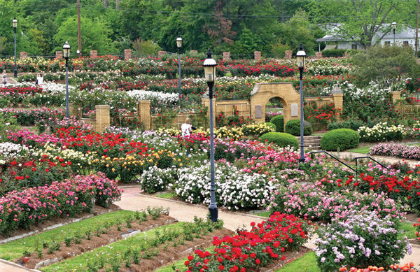 "Tyler has the nickname ""Rose Capital of America"". It gained this name due to the large quantity of rose bushes processed through the area, along with hosting America's largest rose garden."